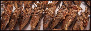 Baht Bugs
