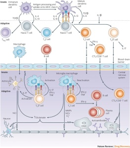 multiple sclerosis and therapeutic targets